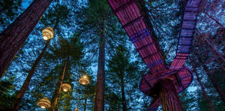 redwoods-night-2-2
